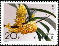 Sweet-scented Osmanthus