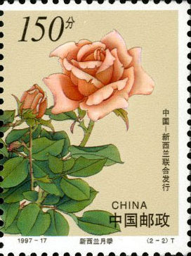 New Zealand Monthly Rose (right)