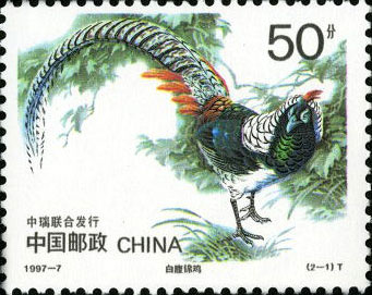 Chinese Copper Pheasant