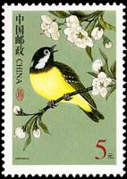 Yellow-bellied Tit