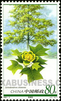 Liriodendron chinese