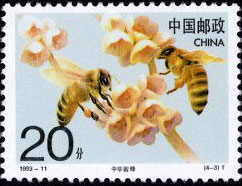 Chinese Bee